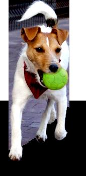 pies - hotel dla psów